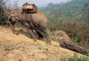 Devastating photos of the world's deforestation