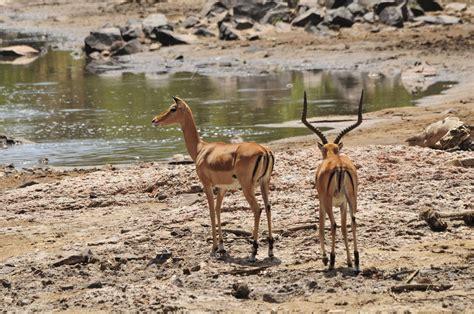 Serengeti nacionālais parks, Tanzānija: pilnīga ...