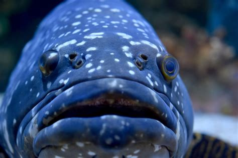 mystic aquarium mysticaquarium exotic maine fish realize moment weekend ocean sea grouper