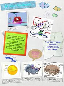 Protein Synthesis  Text  Images  Music  Video