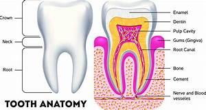 What Is Dental Erosion   Causes  Symptoms  U0026 Treatment