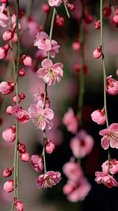 Pink Flowers iphone hd wallpapers free download | iPhone ...