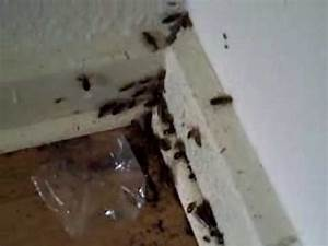 Wie Sehen Kakerlaken Aus : dennis karl kakerlaken 1 youtube ~ Watch28wear.com Haus und Dekorationen