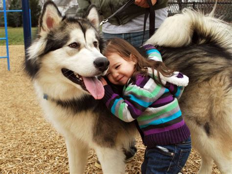 big fluffy dogs Quotes