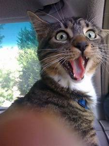 56 Cats Who Are So Excited To See You