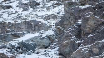 can you spot the snow leopards in these photos snow addiction news about mountains ski