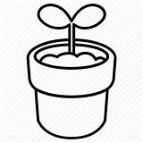 Sprout Drawing Plant Grow Shoot Icon Spring Growth Pot Getdrawings sketch template