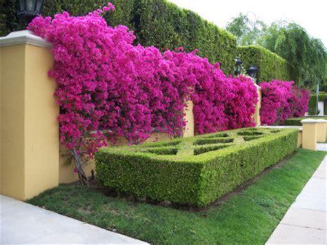 jenis tanaman hias outdoor terbaik tahan panas matahari