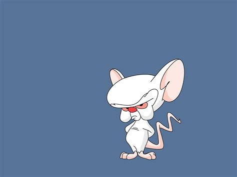 Pinky And The Brain Wallpaper And Background Image