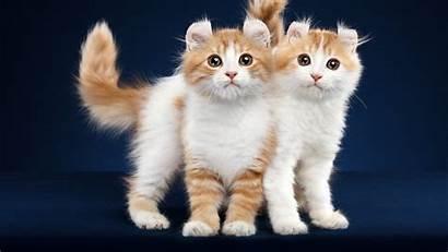 Cute Animals Background Kittens Wallpapers Desktop Hdwallpapers