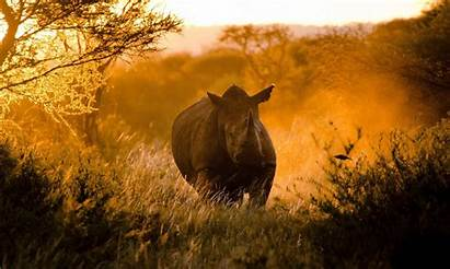 Animal Wild Animals Wallpapers Cool Pets Planet