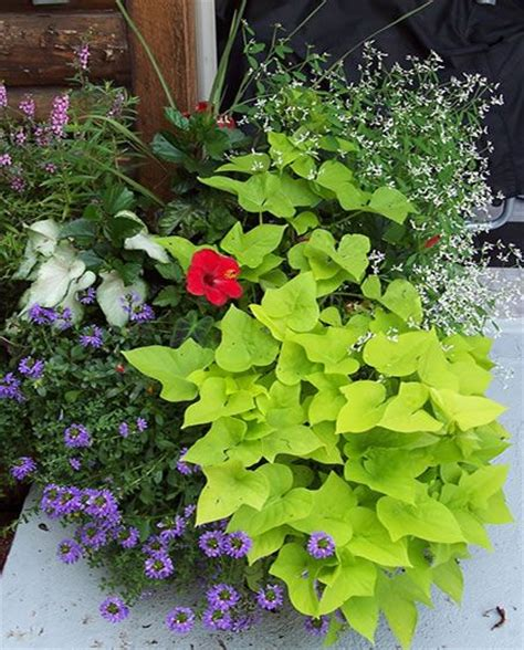 annual flower ideas 17 best images about flowers plants container gardening on pinterest succulent wall container