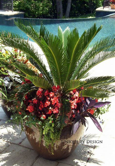 25 best ideas about sago palm on sago palm tree sago palm care and ornamental plants
