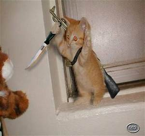 Evil Cat With Gun | www.pixshark.com - Images Galleries ...