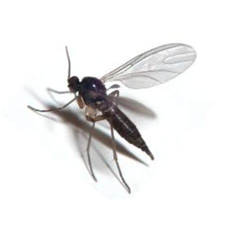 why are there so many flies outside my house why are there so many flies outside my house 28 images images of bed bug bites on babies