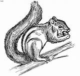 Squirrel Coloring Pages Printable sketch template