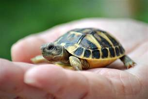 names for pet turtles and tortoises