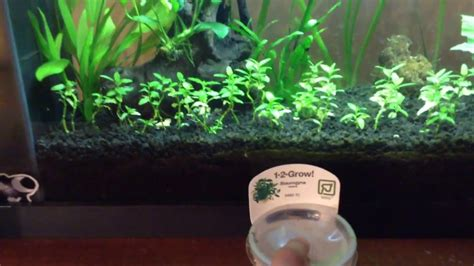 Aquascaping For Beginners by Aquascaping For Beginners Plant And Layout Update