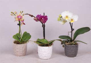 soigner une orchidee en pot comment soigner une orchidee en pot 28 images planter une orchid 233 e comment planter et