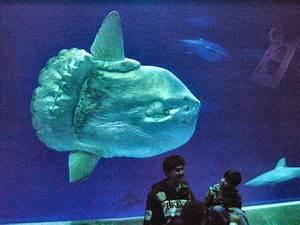Literrata: Sunfish, Moonfish