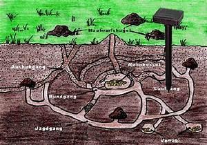 Wühlmaus Oder Maulwurf : maulwurfschreck w hlmaus maus maulwurf falle m use vertreiber schreck solar ~ Orissabook.com Haus und Dekorationen
