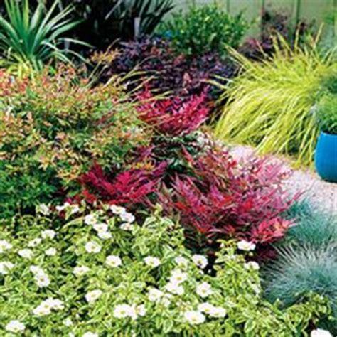 Do You Winter Gardening Blues by Loropetalum Purple Flowering Shrub You Can Prune