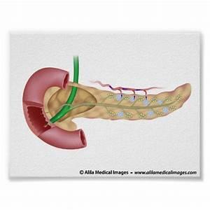 Pancreas System Diagram, Pancreas, Free Engine Image For ...