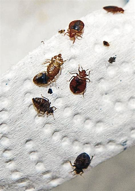 bill  require hotels   bed bug inspections