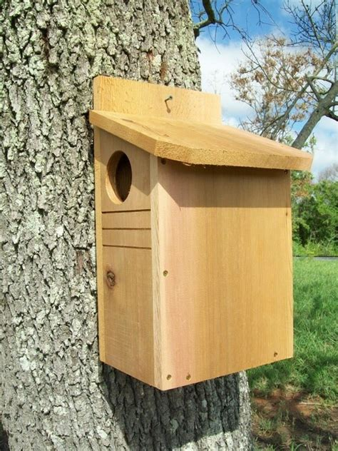 squirrel nest box plans squirrel den box plans