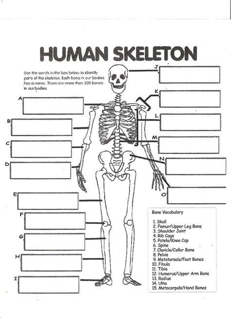 digestive system labeling worksheet answers human skeleton