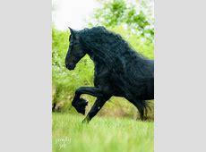 Die besten 25+ Pferde bilder Ideen auf Pinterest lustige