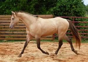 "Horse's Name: ""Sierra Hesa Chief"" Primary Breed: Quarter ..."