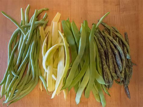 types of green beans home remodeling design kitchen garden