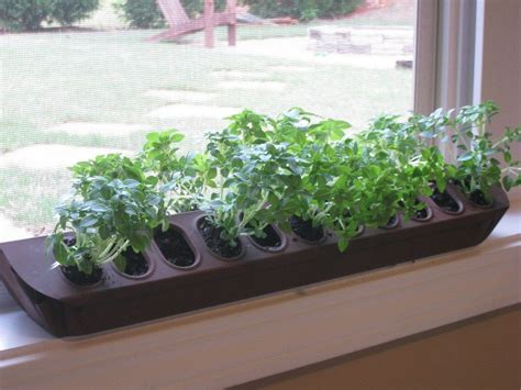 Window Sill Herb Garden Box by Upcycled Poultry Herb Planter Center Crunchy