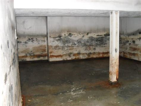 Ugly House Photos » Mold & Mildew