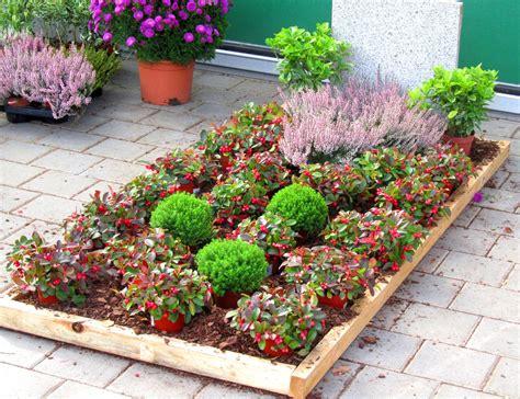 pflanzzensset einzelgrab schatten pflanzen versand harro