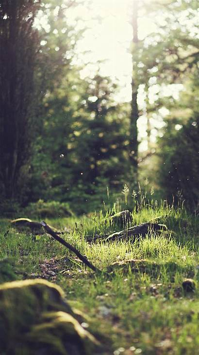 Nature Iphone Forest Wallpapers Tree Jonas Nilsson