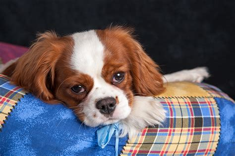 hunde op versicherung archive  blog