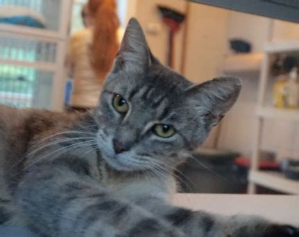 west milford animal shelter   pet   home