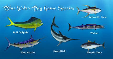blue water sportfishing aaa charters