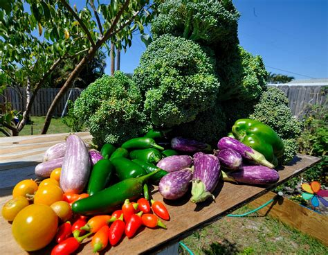 6 Steps To Your Delicious Vegetable Garden