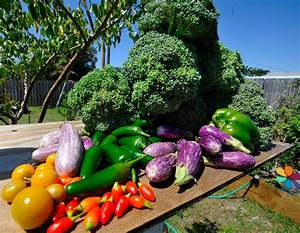 organic agriculture and permaculture in portugal