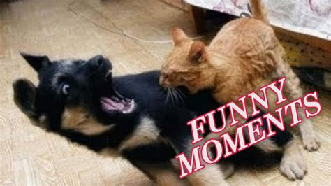 funny dogs  cats compilation  youtube