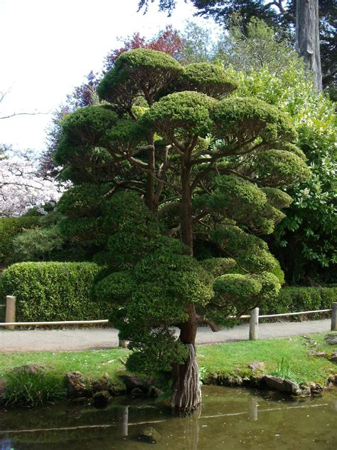 japanese tea garden san francisco reviews of japanese