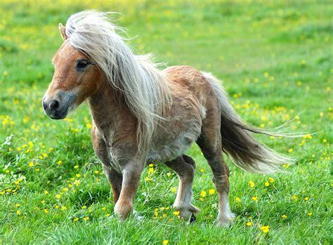 pretty ponies alliance pony recruiting former wikia pst bump
