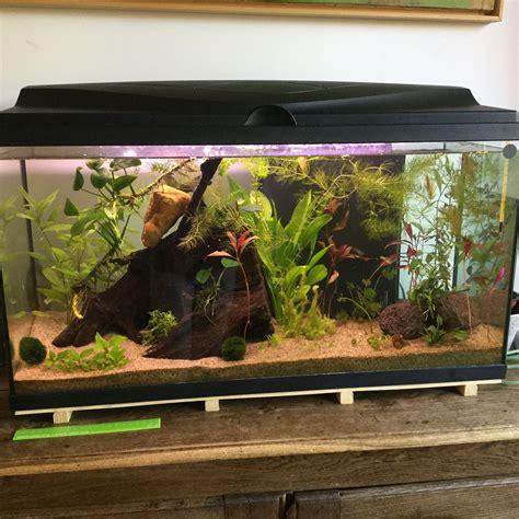 combien de poisson dans un aquarium combien de kubotai dans un aquarium de 90l