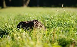 Maulwurfbekämpfung Im Garten : maulwurf im garten bek mpfen die gartenoase ~ Michelbontemps.com Haus und Dekorationen