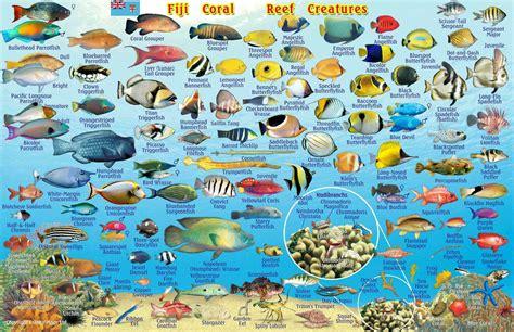 avoid eating reef fish vanuatu