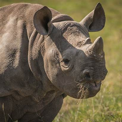 Zoo Rhino Animals Chester Plan Meet App