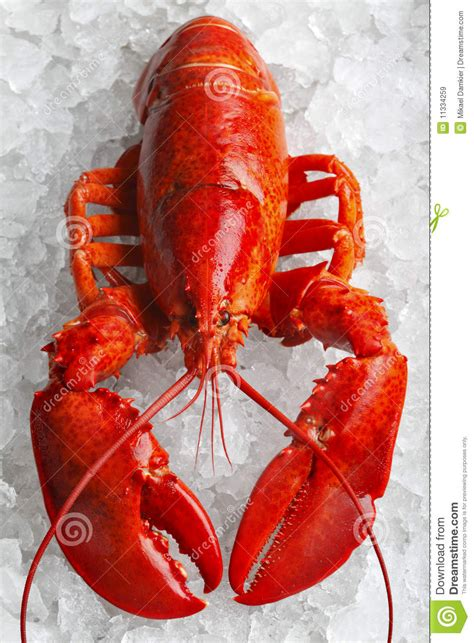 lobster pictures kids search